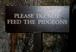 Sign--Pidgeons